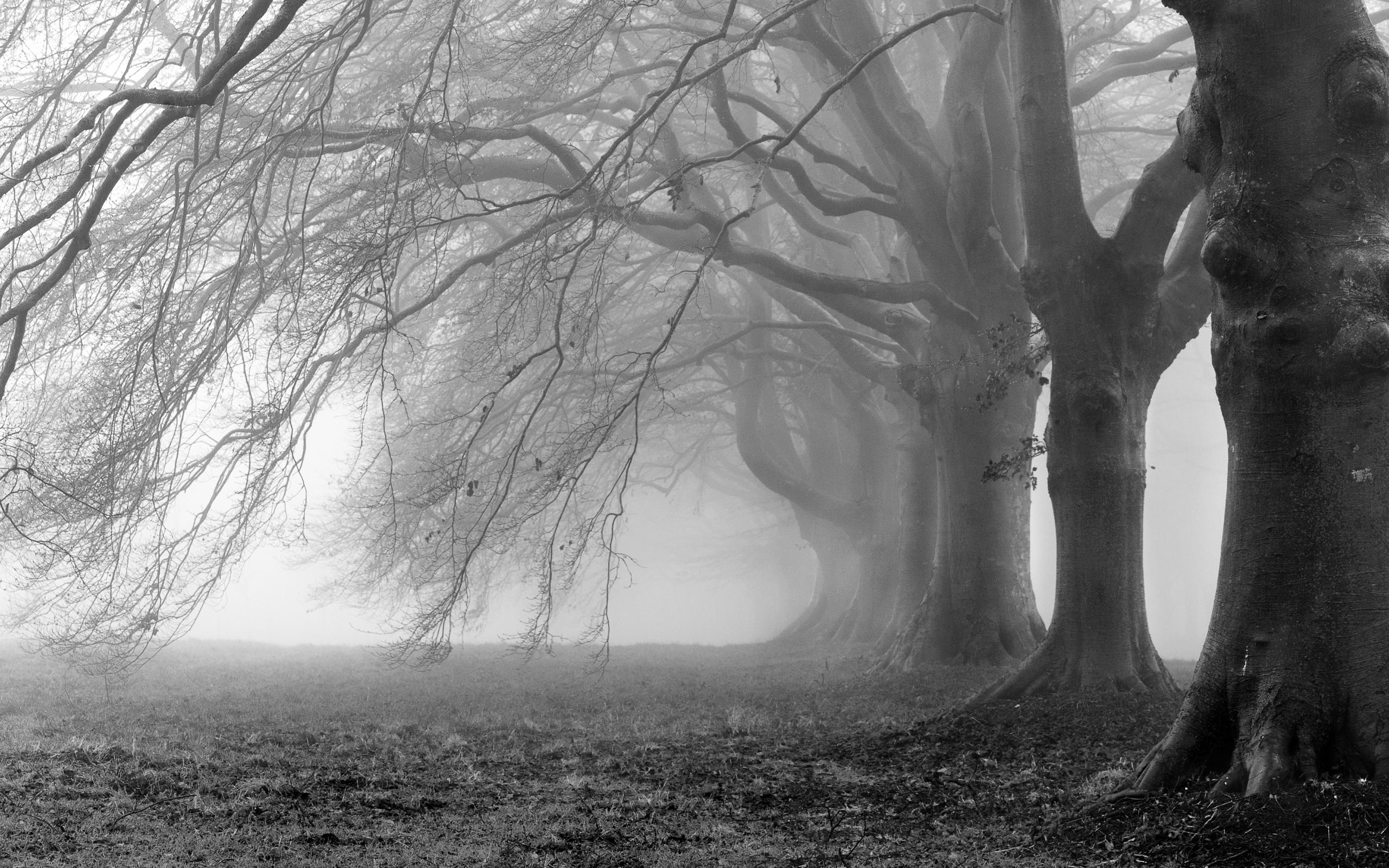 Пейзажи дерево