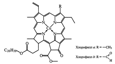 Хлорофилл в домашних условиях